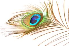 Peacock feather. On white background Royalty Free Stock Photography