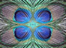 Peacock feather abstract design Royalty Free Stock Photos