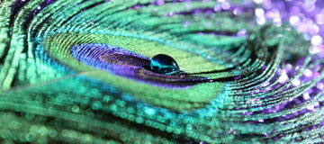 Peacock Feather. An abstract image of a peacock feather with a blue water drop royalty free stock images