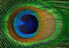 Peacock feather. Peacock feather as a background Stock Photos