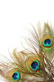 Peacock feather background Royalty Free Stock Photo