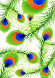 Peacock feather background Stock Images