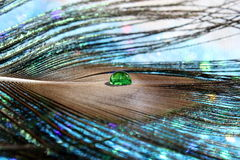 Peacock Feather. A beautiful peacock feather with a clear green water drop royalty free stock photo