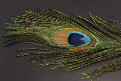 The peacock feather on a black background Stock Photo