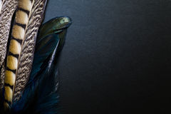 Peacock Feather on Black Background Stock Images