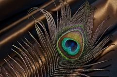 Peacock feather on a brown background. Stock Photo