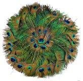Peacock Feather in circle Stock Photos