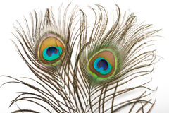 Peacock feather close up Royalty Free Stock Photos