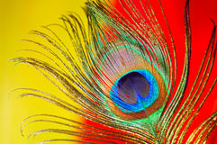 Peacock Feather Close-up Royalty Free Stock Photography