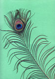 Peacock feather close-up on a green Stock Photography