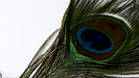 Peacock feather stock video footage