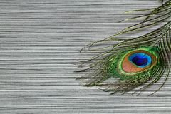 Peacock feather closeup Stock Image