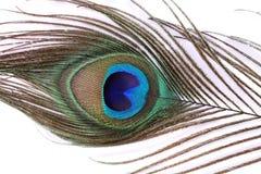 Peacock feather closeup Stock Photos