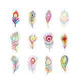 Peacock feather collection for your design. Vector illustration Royalty Free Stock Photo