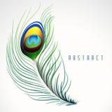 Peacock feather creativity. Stock Photo
