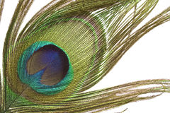 Peacock feather detail Royalty Free Stock Photos