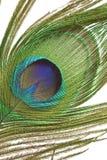 Peacock feather detail Stock Photos