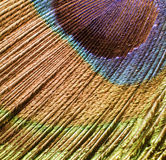 Peacock feather detail Royalty Free Stock Images