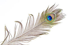 Peacock feather detail Stock Images