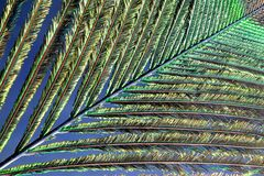 Peacock feather. Detailed image of an peacock feather Royalty Free Stock Photography