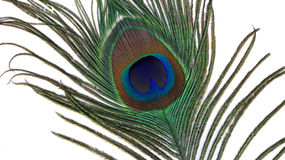 Peacock feather eye. On white background Stock Photos