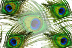 Peacock feather eye Royalty Free Stock Photos