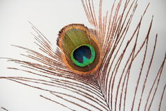 Peacock Feather Eye Stock Photos