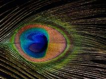 Peacock feather eye detail Royalty Free Stock Photos