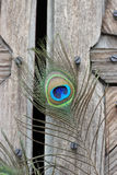 Peacock feather eye. One Peacock tail feather on broken abstract wooden door Stock Image