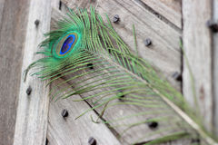 Peacock feather eye. One Peacock tail feather on broken abstract wooden door Stock Photography
