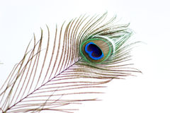 Peacock feather eye. Peacock tail feather on air Royalty Free Stock Images