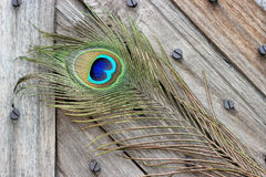 Peacock feather eye. Peacock tail feather on broken abstract wooden door Stock Photography