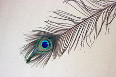 Peacock feather eye. Peacock tail feather on wooden background Royalty Free Stock Image