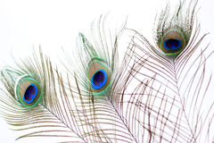 Peacock feather eye. Three Peacock tail feather on air Royalty Free Stock Photos