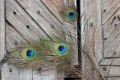 Peacock feather eye. Royalty Free Stock Photos