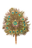 Peacock feather fan royalty free stock images