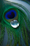 Peacock feather with glass stone Royalty Free Stock Photos