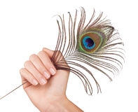 Peacock feather in hand Royalty Free Stock Images