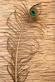 The peacock feather. In the interior of the house Royalty Free Stock Image
