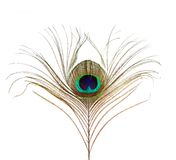 Peacock Feather Isolated Stock Photography