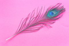 Peacock feather isolated on red background Royalty Free Stock Photos