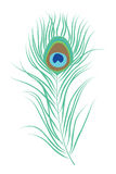 Peacock feather isolated vector illustration stock illustration