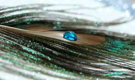 Peacock Feather. A lovely peacock feather with a bright blue water drop stock photo