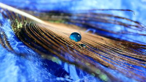 Peacock Feather. A lovely peacock feather with a bright blue water drop royalty free stock photography