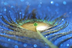 Peacock Feather. A lovely peacock feather with a bright green water drop and a blue bokeh background stock photography
