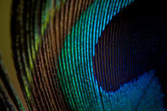 Peacock feather macro. Detail closeup stock photos