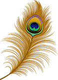 Peacock Feather. Over white. EPS 10 royalty free illustration