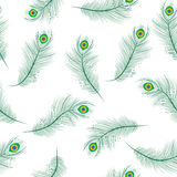 Peacock feather seamless texture, peacock feathers background. Feathers of a peacock wallpaper. Vector illustration. Stock Photos