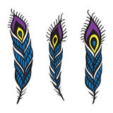 Peacock Feather set. vector illustration
