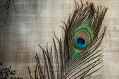 Peacock feather on textured background Royalty Free Stock Photo